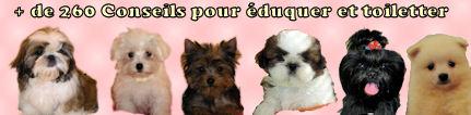 Plus de 290 conseils pour éduquer et toiletter nos petits chiens.